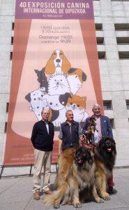 Más de 600 perros llenarán los pabellones de Ficoba en la Exposición Canina Internacional de Gipuzkoa